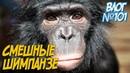 Смешные животные Сонные обезьяны Трусливые верблюды и опасные коровы