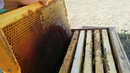 Как сохранить медовые рамки в зиму Кормовой запас пасеки на весну!