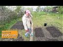 ДАДИМ ОЛЕ ВТОРОЙ ШАНС! Решительно принялась сажать огород. Купили дом с садом на Юге в станице.