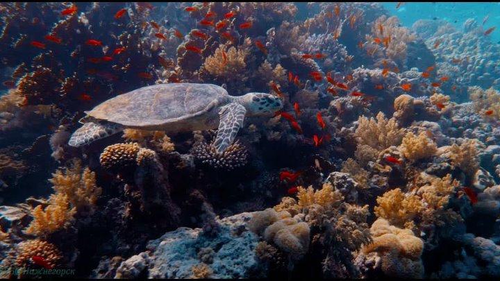 BBC Заколдованное королевство Документальный природа животные 2013