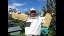 Качаем мед урожая 2020 Сотовый мёд урожая 2020