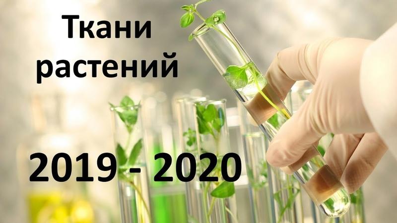 2 Ткани и органы 6 класс биология подготовка к ЕГЭ и ОГЭ 2020