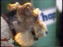 Дог Шоу 1 июня 1996 г НТВ
