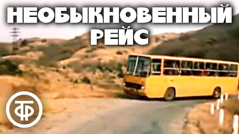 Необыкновенный рейс (1983). Душевная комедийная короткометражка