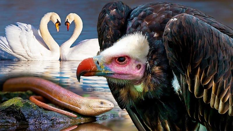 Великаны и карлики животного мира Как они выживают в дикой природе Все как у людей