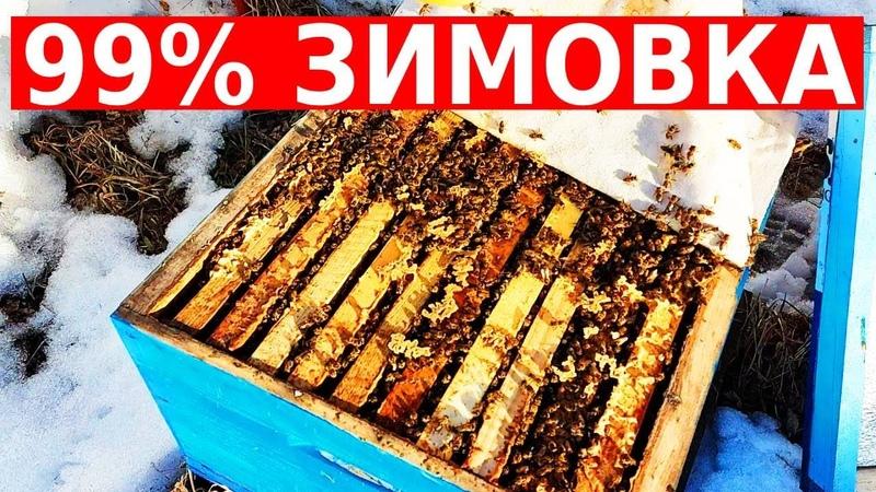 Самая прожорливая зимовка пчел за последние годы сибирский пчелоблог