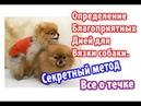 Определение благоприятных дней для вязки собаки. Секретный метод. Все о течке собаки.