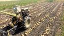 СУПЕР КАРТОФЕЛЕКОПАЛКА. Мотоблок копает картошку быстро и качественно. Уборка картофеля ЧАСТЬ №1.