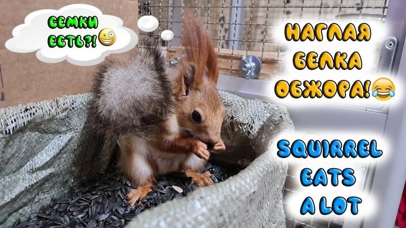У меня самая жадная и прожорливая белка на свете 🤣🤣🤣 greedy squirrel