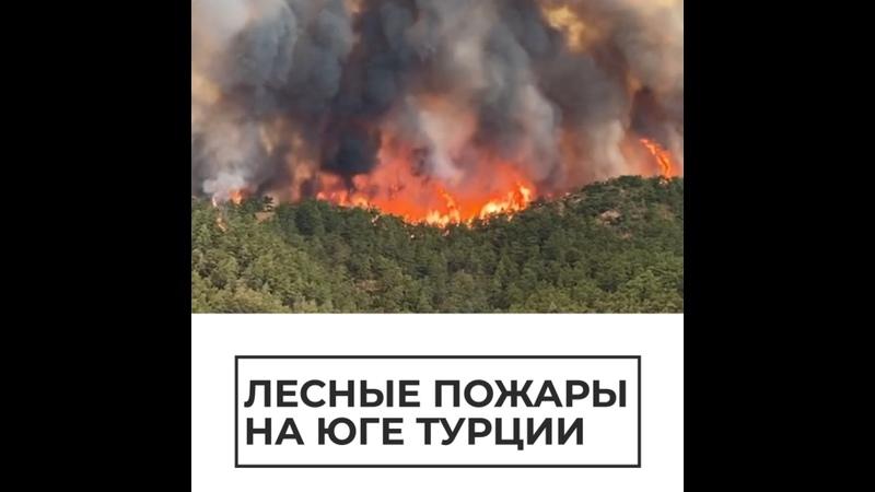 Лесные пожары на юге Турции