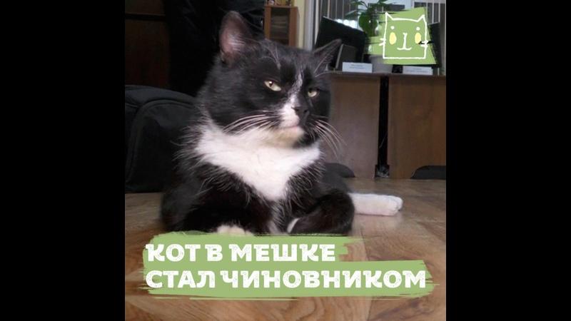 Спасенный кот из мешка стал чиновником