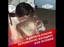 В Джубге спасли беременную женщину и ее 16 собак