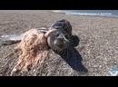 Спасение тюленей