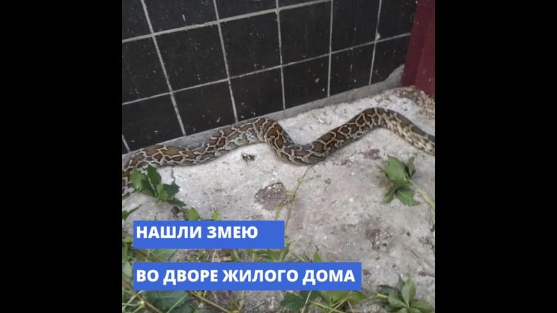 В Тольятти спасатели поймали крупную змею