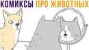Комиксы про животных. Они могут говорить! Мемозг 618