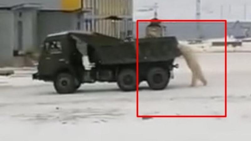 Где то в России белые медведи угнали армейский КамАз