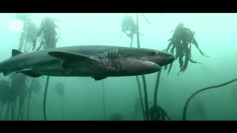 Подводные леса Африки Документальный фильм BBC